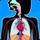 Anatomix - Human Anatomy